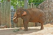 adult elephants playing with sands poster