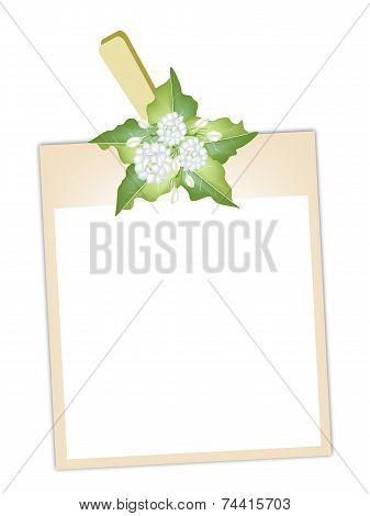 Blank Photos with Jasmine Flowers Hanging on Clothesline