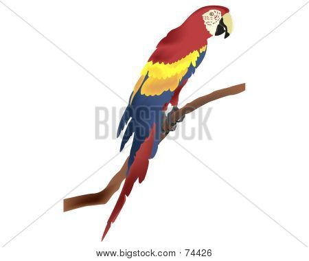 Parrot Draw