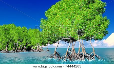 Red mangroves on Florida coast