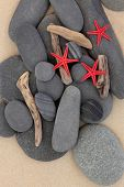 Starfish sea shells, driftwood and pebbles on a sand beach. poster