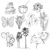 Set doodle sketch Strelitzia plumeria lotus elephant palm coconut cactus butterflies and seashells vector poster