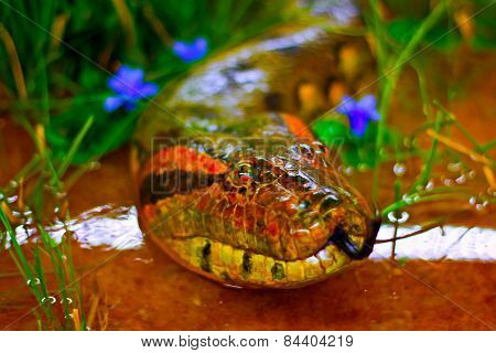 A Digitally Constructed Painting Of Green Anaconda Snake