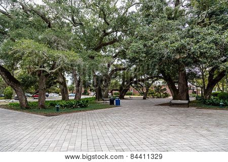 Oak Tree And Pavers In Park