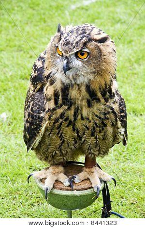 Big Bird Watching You