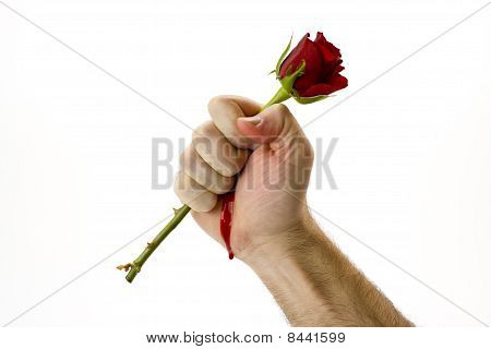 Hand holding red rose