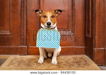 Dog Left Alone