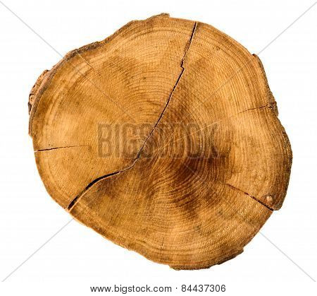 Annual Tree Growth Rings Of The Cross-section Of A Tree Trunk Isolated On White