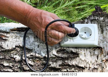 Power Receptacle And Switchplug On A Tree
