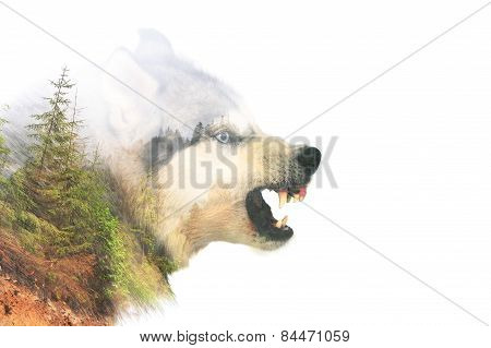 Angry Dog. Double Exposure