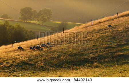 summer evening on pasture