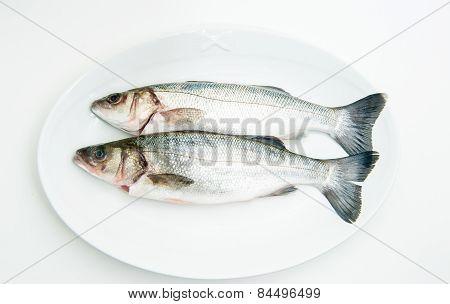 Couple Of Fresh Raw Seabass Fish On White Plate
