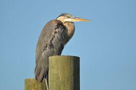 Perched Coastal Bird
