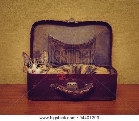 Cute Cat Lying In A Suitcase
