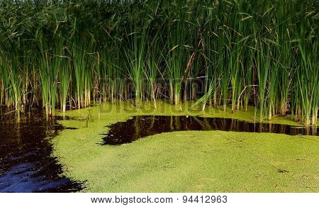 abstract green water surface in pond for background
