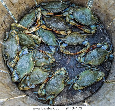 Crabs for Dinner
