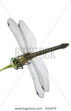 Green-Eyed Dragonfly