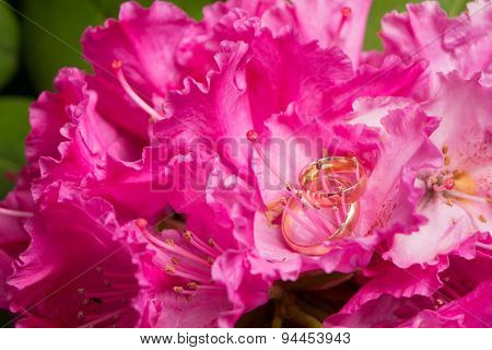 Wedding Rings And Flowers Of Pink Rhododendron