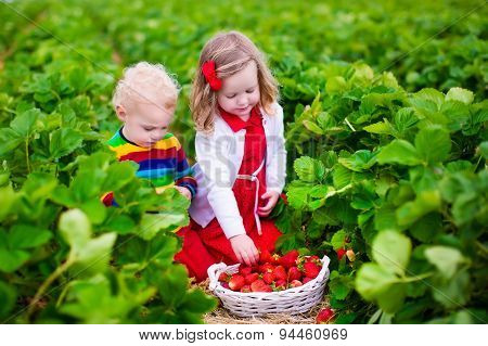 Kids Picking Strawberry On A Farm Field