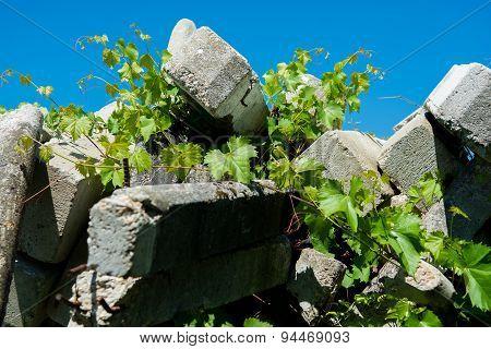 Concrete and Vine