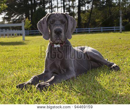 Posing Puppy
