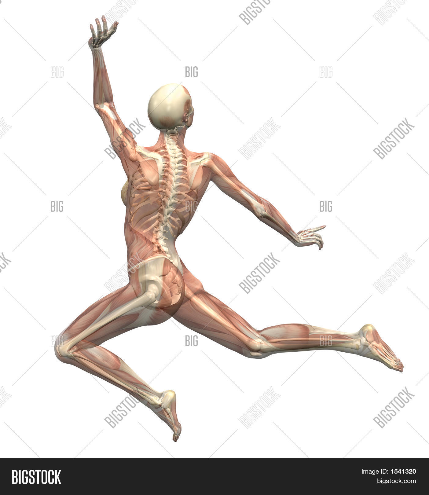 Anatomy Motion - Woman Image & Photo (Free Trial) | Bigstock