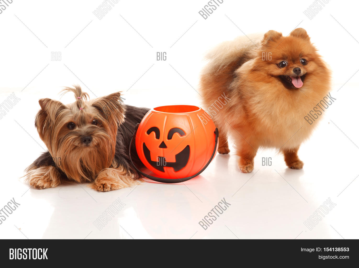 two sweet dog - image & photo (free trial) | bigstock