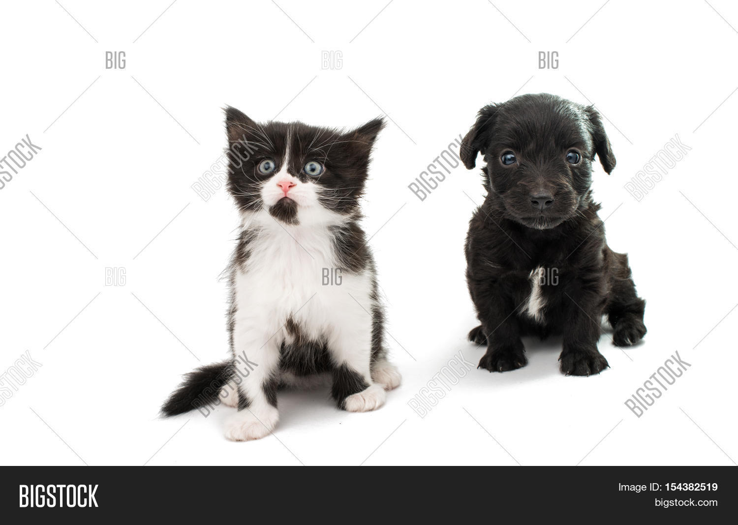 Black Spaniel Puppy Image Photo Free Trial Bigstock