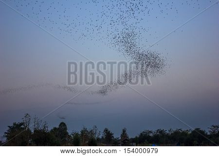 bats colony flying out from cave at night