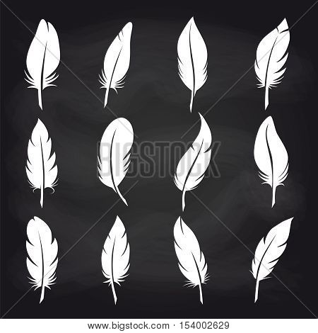 White feather on chalkboard background vector icons. Vintage feather set