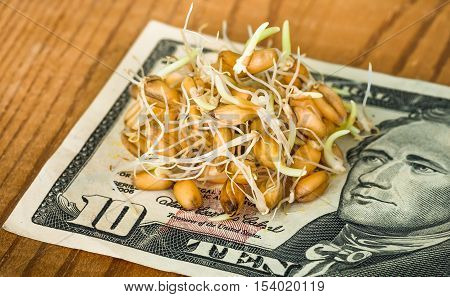 germinating grain environmentally friendly organic wheat lying on the banknote of ten dollars ready for sale as a healthy diet as well as for the energy drinks preparation of malt beer close-up