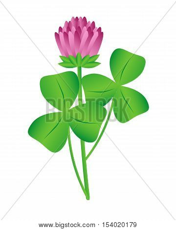 Clover flower on a white background. Isolated object vector illustration