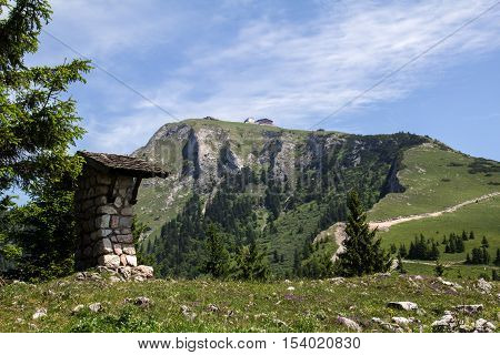 Schafberg, Austrian Alps / Colorful species in the area of Schafberg (Austria)
