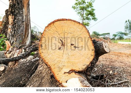 The tree was cut in pieces on the ground parched and barren.