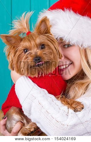 Beautiful girl in santa cap with yorkie dog in red sweater