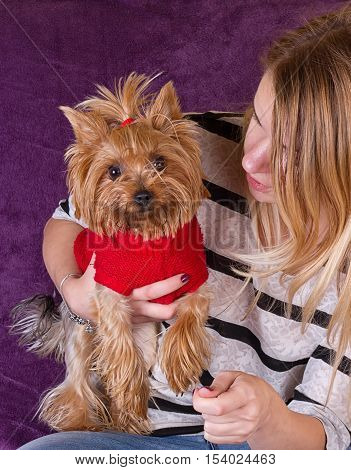 Cheerful beautiful young girl having fun with dog Yorkshire terrier