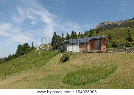 Schafberg, Austrian Alps / Colorful species in the area of Schafberg (Austria).