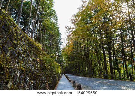 Walks Around Pine Tree In The Nikko