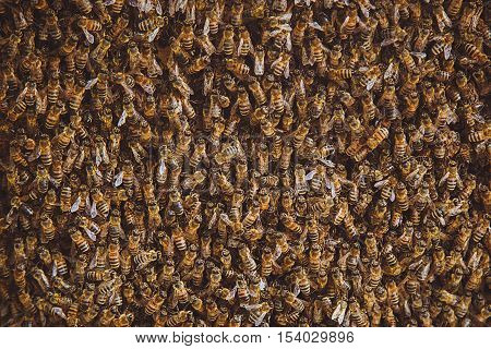 Apiary. Old beehive. A swarm of bees sitting outside a beehive