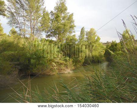 Río Segura con abundante vegetación y cielo
