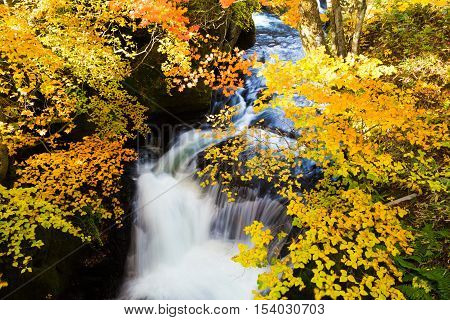 Nikko Is Nippon Ryuzu Waterfall With Autumn Colorful Leaves