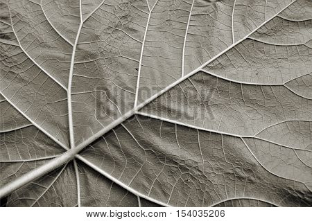 Underside of a leaf in Autumn in a Forest