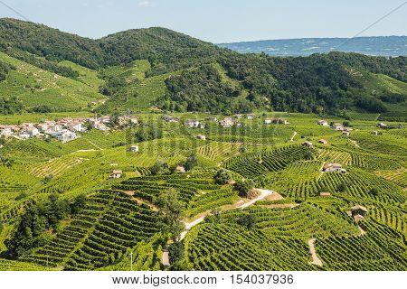 Vineyards on the hills of Valdobbiadene production zone of sparkling prosecco wine