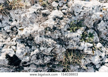 texture of mountain rock with moss, wild moss