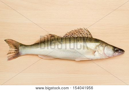 Fresh fish pike perch close-up on a light wooden background