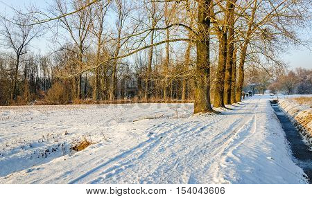 Snowy narrow bike and walking path between a row of bare trees and a frozen ditch on a bright and sunny day in the winter season.