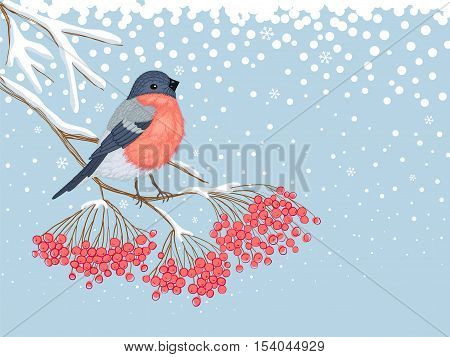 Winter blue snowy horizontal card with beautiful bright Bullfinch on the branch of red rowan and empty place for your text