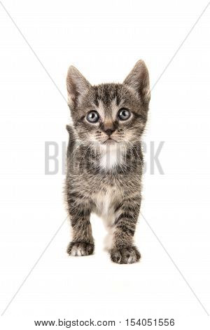 Cute tabby baby cat kitten walking en looking up isolated on a white background