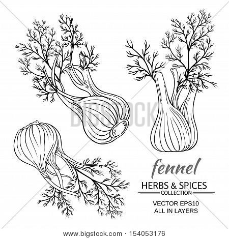 fresh fennel vector set on white background
