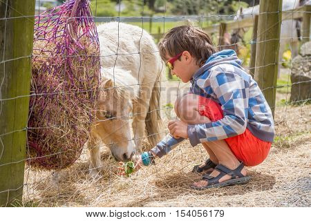 Little kid feeding pony horse on an animal farm. Cute young boy feeding pony horse in farm. Active leisure with children outdoors. Child feeds pony horse at pet zoo.